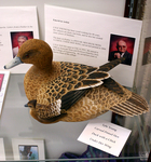 Carved Pintail Hen Duck with a Chick Under Her Wing (2)