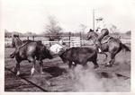 Steer Wrestling 1972