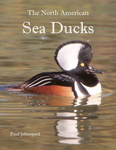 The North American Sea Ducks: Their Biology and Behavior by Paul A. Johnsgard