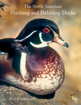 The North American Perching and Dabbling Ducks: Their Biology and Behavior by Paul Johnsgard